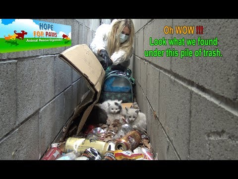 Oh WOW!!!  Look What We Found Under This Pile Of Trash!!!  Please Share.