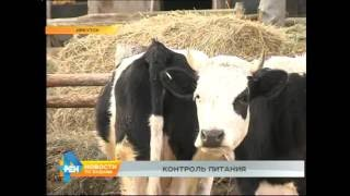 Корма для животных как угроза снижения качества продуктов в регионе