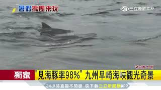「見海豚率98%」 九州早崎海峽觀光奇景|三立新聞台