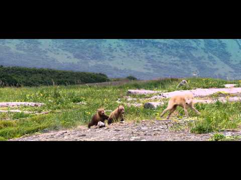 Disneynature's Bears -