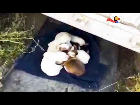 Soldier Finds Abandoned Puppies — And Knows What He Has To Do  | Dodo Heroes Season 1