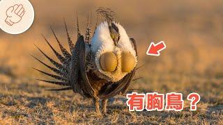 絕對會令你震撼的稀有鳥類!
