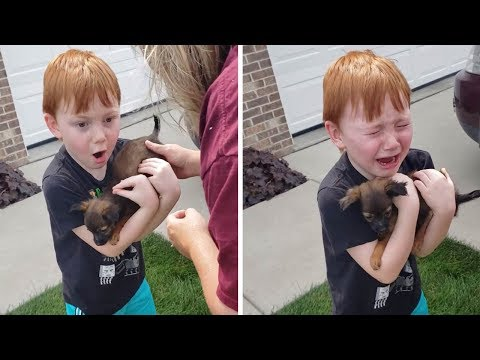 This Adorable Boy Cries & Breaks Down When He Meets His New Dog
