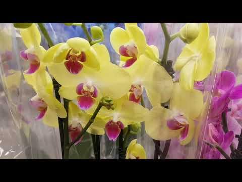 LEROY MERLIN | ОРХИДЕИ в ЛЕРУА МЕРЛЕН | Орхидея Orchid ORCHIDS ОРЕНБУРГ 8 марта