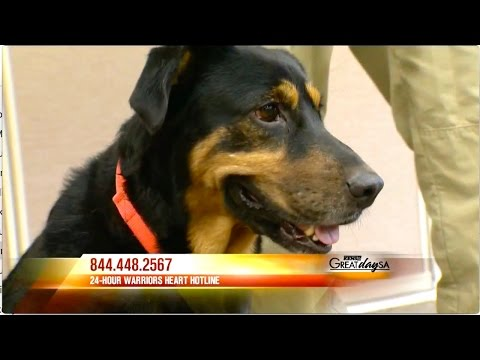 CBS How K9 Service Dogs help Veterans at Warriors Heart and Operation Overwatch