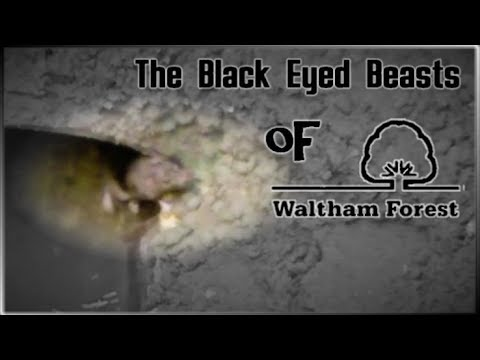 The Black Eyed Beasts of Waltham Forest
