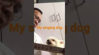 Choey, singing dog