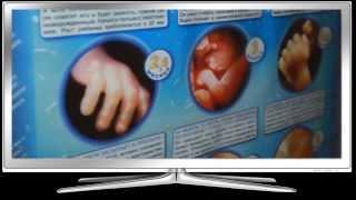 видео Режим дня беременной женщины