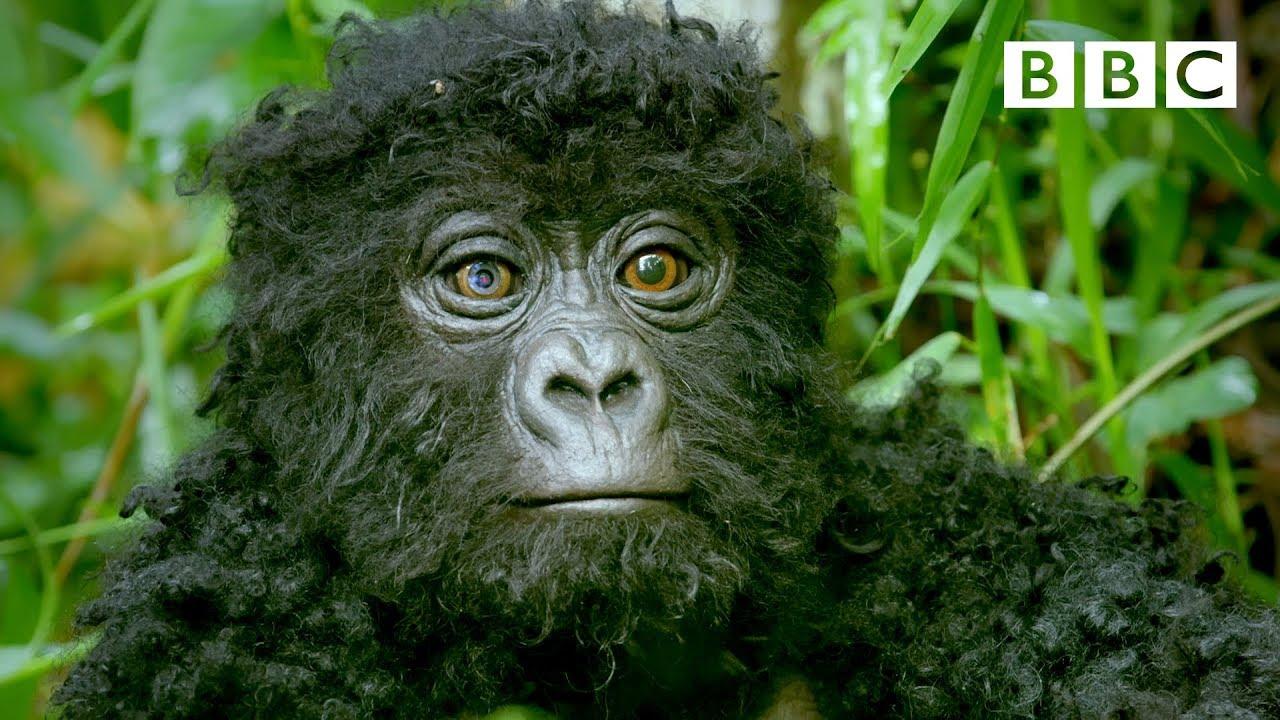 Robot Spy Gorilla in the Wild