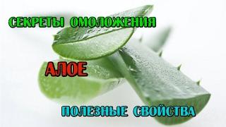 видео Невероятное растение Алоэ Вера: полезные свойства