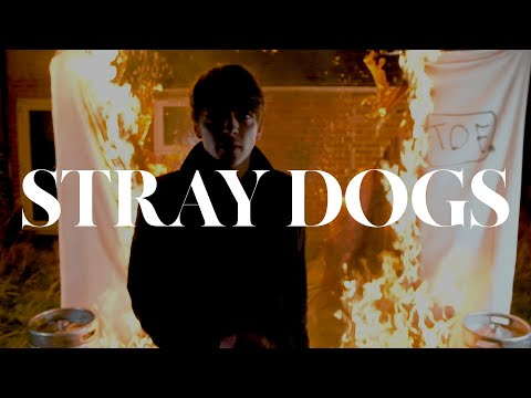 The Dead Freights - Stray Dogs (Official Video)