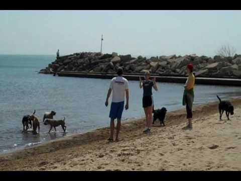 Dog Beach at Gillson Park