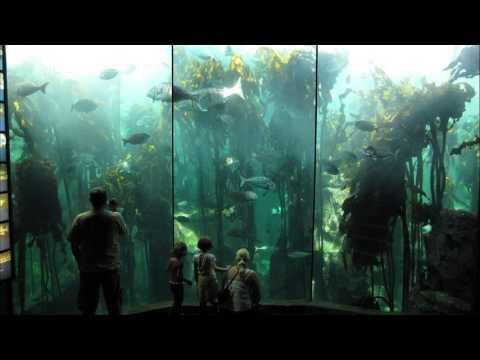 Two Oceans Aquarium - Cape Town