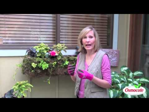 Professional Design Tips For Colorful Container Gardens
