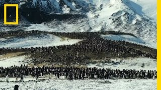 What are the Differences Between Adélie and Emperor Penguins?   Continent 7  Antarctica