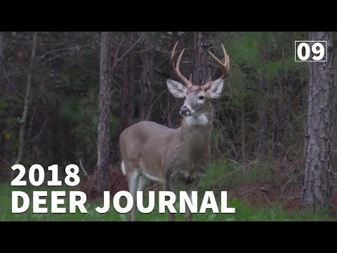 Adapting To Hunting Pressure On GEORGIA PUBLIC LAND - 2018 Deer Journal | Ep.#9 | Week 9-10 |