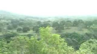 mango plantation 4 sale in guimaras