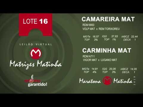 LOTE 16 Matrizes Matinha 2019