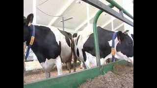 Современная ферма открылась всовхозе «Майский»(, 2013-08-21T08:00:07.000Z)
