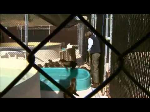 Fur Seal Pup Rehab