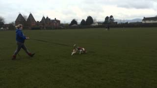 Canine Tracking At Worcester Dog Training