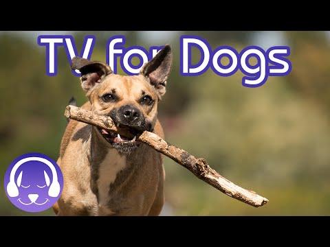 Walk My Dog TV! Desensitising City Walk for Dogs!