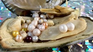 REAL JUMBO WHITE PEARLS FOUND IN CLAM ON FUN HOUSE TV