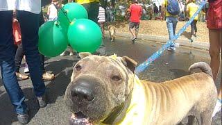 Caminata Canina Tierrago 2014, Feria De Las Flores