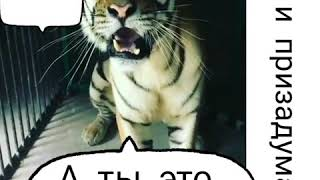 Тигор ещё та кошка.