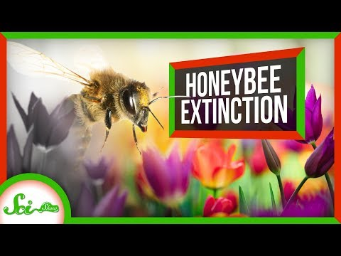 What Would Happen if Honeybees Went Extinct?