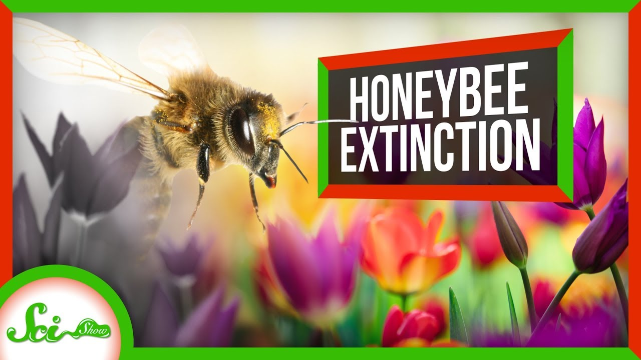872de60e7 How Worried Should We Be About the Bees? - YouTube