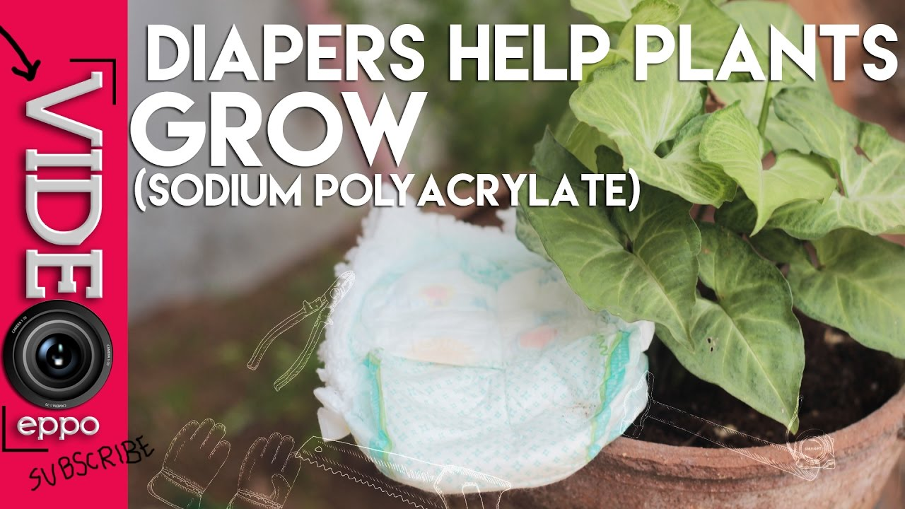 Diapers Helps Your Plants Grow 100 Working