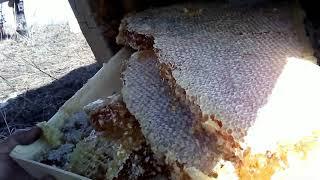 вырезка Мёда из 17 колоды (или когда не нужно его вырезать)