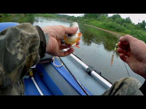 Река Пижма. Рыбалка на спиннинг и поплавок