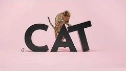 PrimaCat - Kissan ruokinta on taitolaji