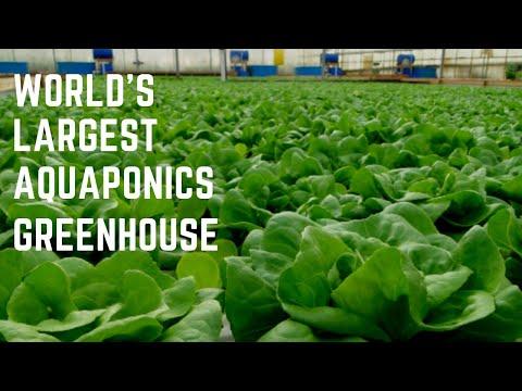 Jon Parr's Viridis Aquaponics – Visit to the 8 Acre Greenhouse!