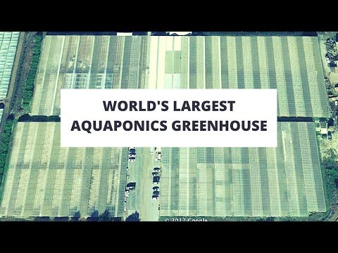 Jon Parr's Viridis Aquaponics - Visit to the 8 Acre Greenhouse!