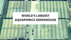 Jon Parr's Viridis Aquaponics - Visit to the 8 Acre Greenhouse!