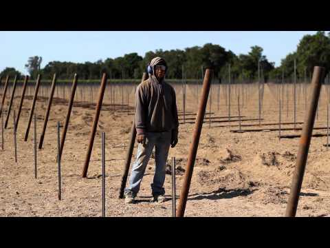 Vineyard End Post Installation Demonstration by Vineyard Industry Products Co.
