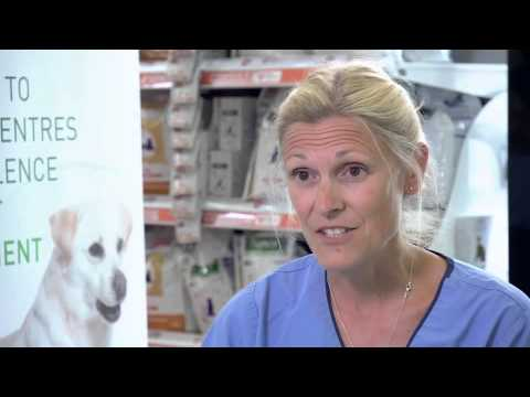 Tackling Dog And Cat Obesity - Royal Canin