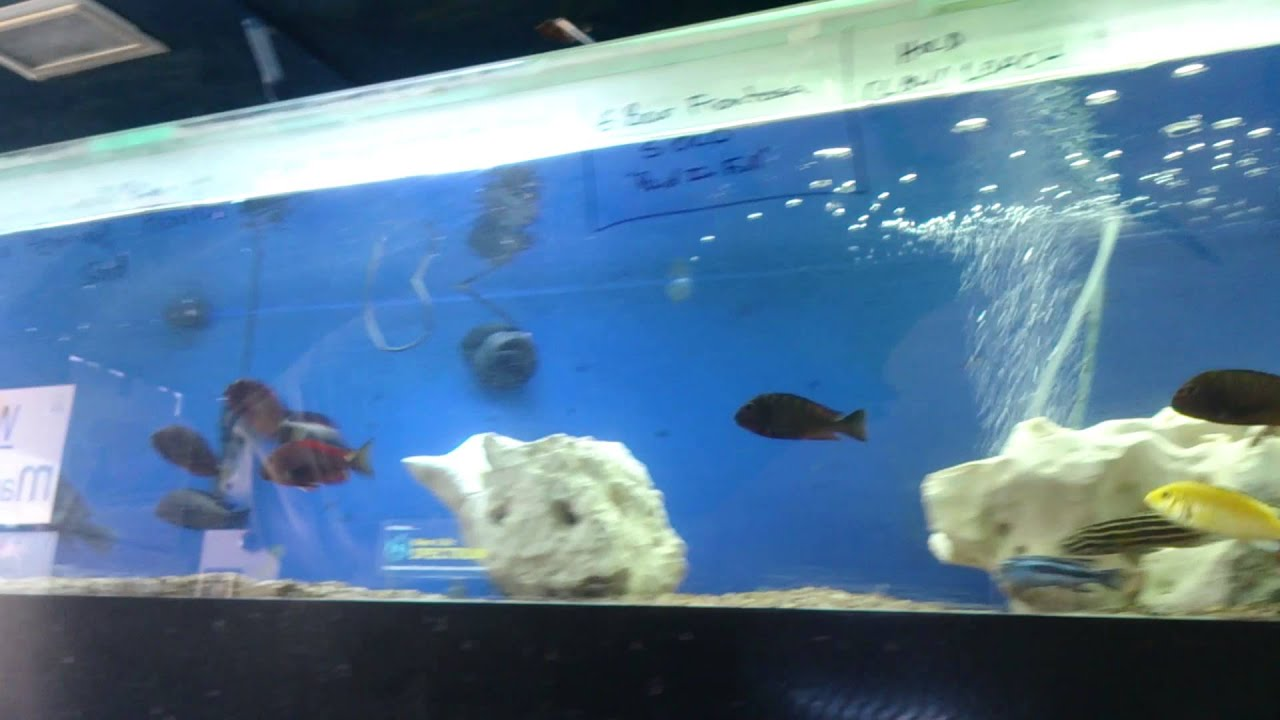 Aquarium fish dying new tank - How New Fish Act When They Are Stressed