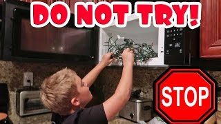 PUTTING CHRISTMAS LIGHTS IN THE MICROWAVE!