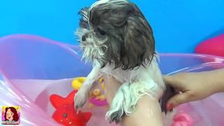 LOLA TOMA BANHO - Tia Cris dá banho na cachorrinha Lola - Novo ! #EuamoaLola #lola #lolababydog