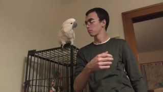 Plot Twist! Bird Loves Steven More! Back to the Future Day, Target, & Bird Update!