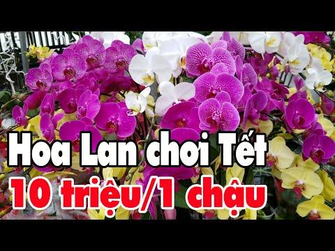 10 triệu 1 chậu Lan chơi Tết đi Chợ Hoa Tết 2019 ở Sài Gòn