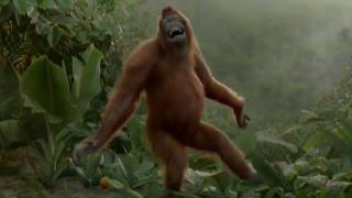 Танцующая обезьяна )))