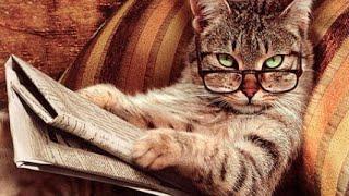 Топ 10 самых умных пород кошек