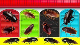 Learn Colors with GIANT COCKROACH Attack & BAD Baby Mega gummy bear Nursery Rhymes For Bad Kids