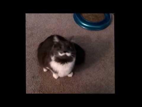 Hamilton the Hipster Cat Dance Compilation – Mustache Cat Dance Mix