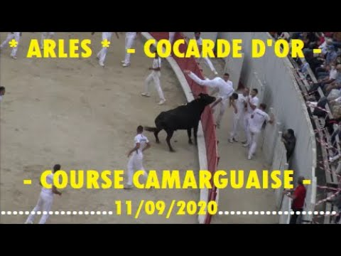 Download ARLES/88 éme COCARDE D'OR/Course Camarguaise-11/09/2020